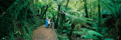 Forest bathing in a biophilic city, Wellington, NZ